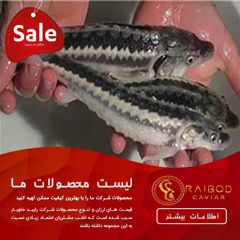 ماهی خاویار زنده