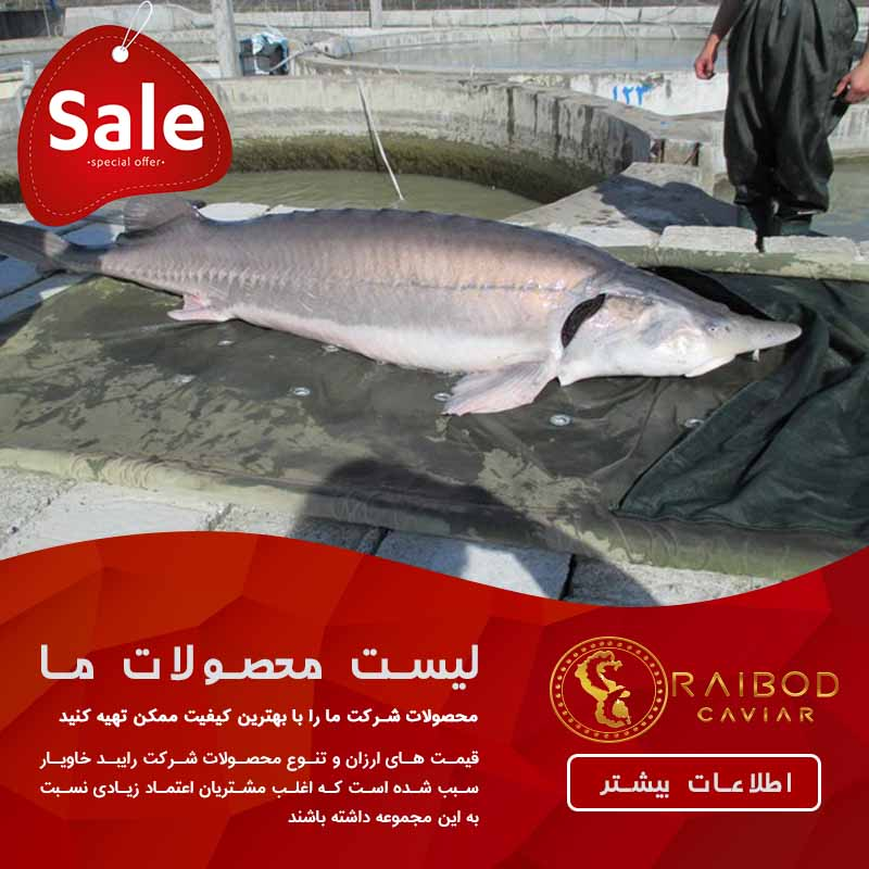 فروش ماهی خاویار ارزان