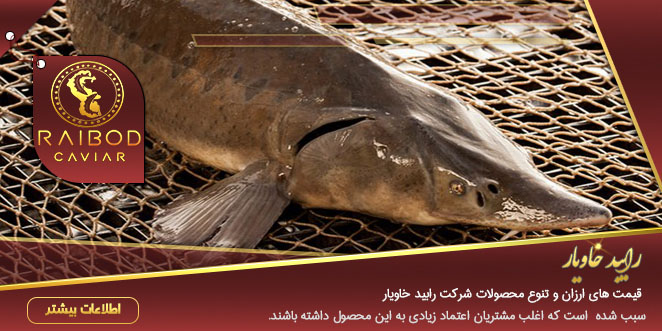 خرید انواع ماهی خاویار