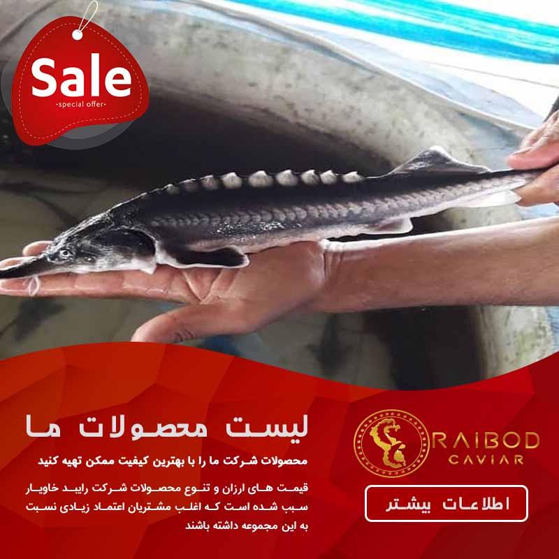 تولید ماهی خاویار
