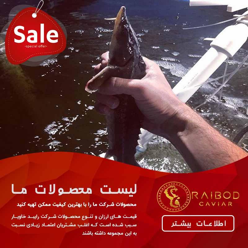 خرید ماهی خاویار زنده