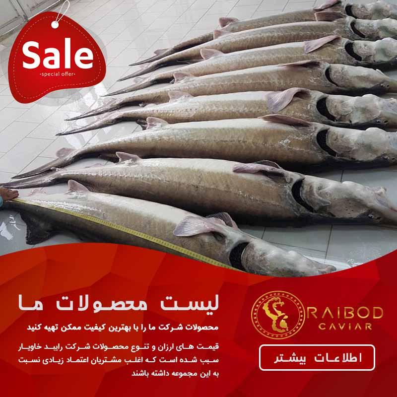 تجارت ماهی بلوگا