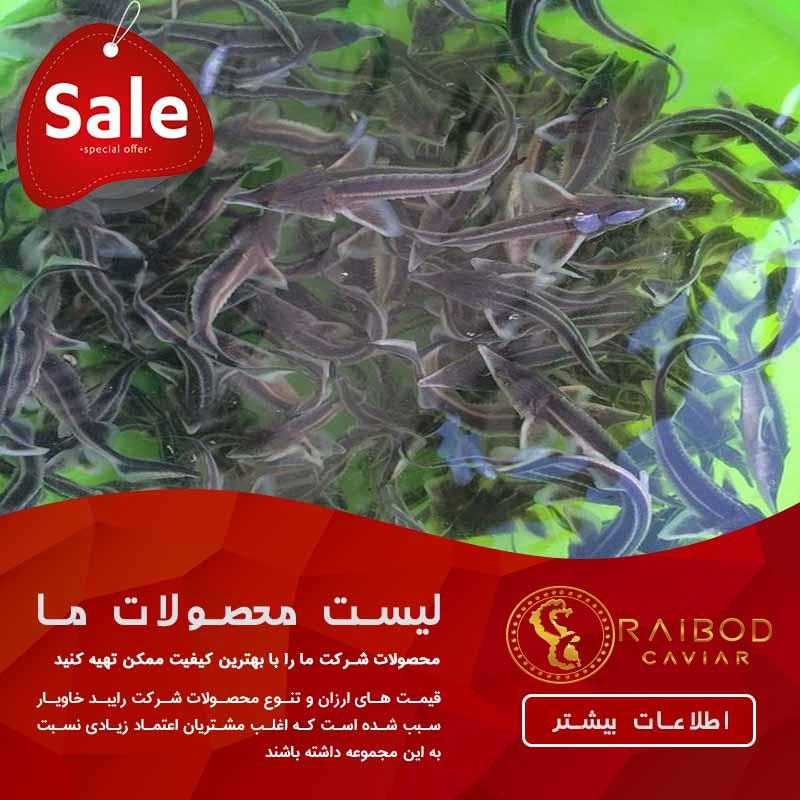 خرید و فروش تخم ماهی خاویاری